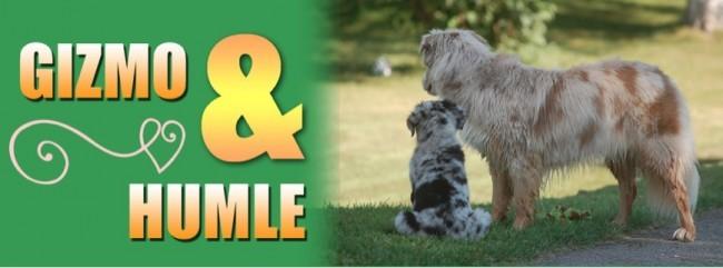 ♣hundar och ungar och lite till♣